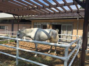 東門入ってすぐにお馬さんがお出迎え。