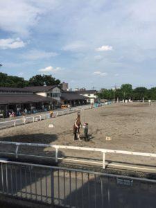 今日はホースショーを見ました。馬って立って歩けるですね。