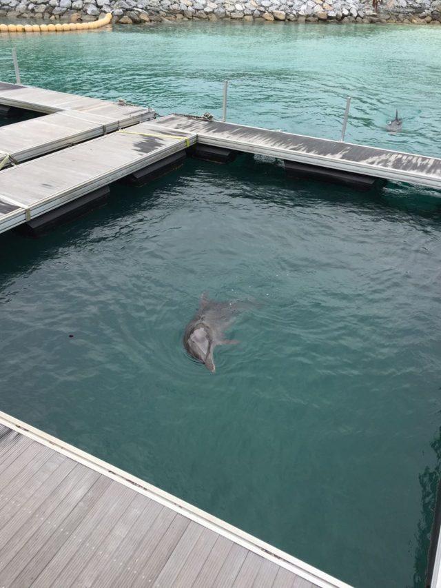 イルカラグーン。こんなに近くでイルカが見れる機会も珍しいです。