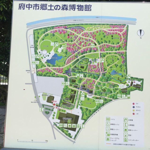 府中市郷土の森の地図。入り口においてある地図です。水遊びの池(じゃぶじゃぶ池)は地図の左上。入口から子供の足で10分ぐらいでしょうか。
