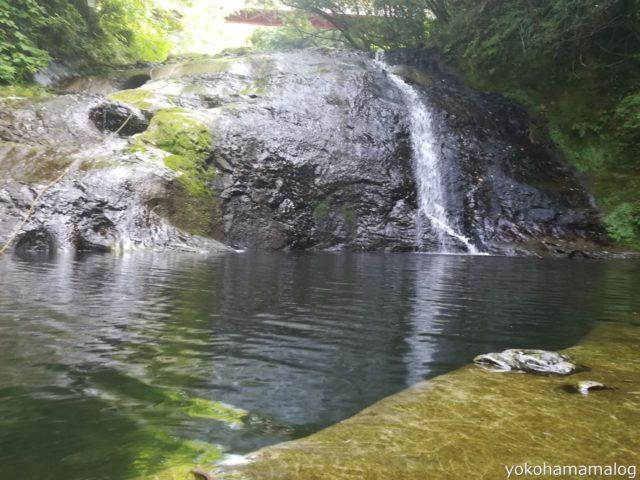 豊英大滝のメインは大滝からの飛び込みのようです。