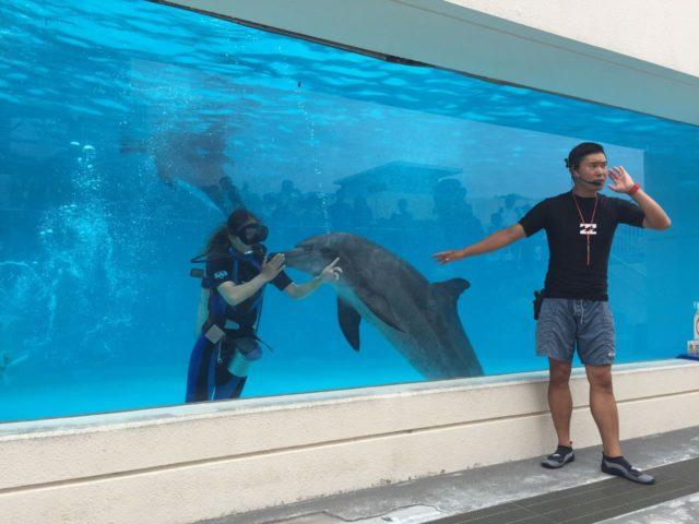美ら海水族館のダイバーズショー。