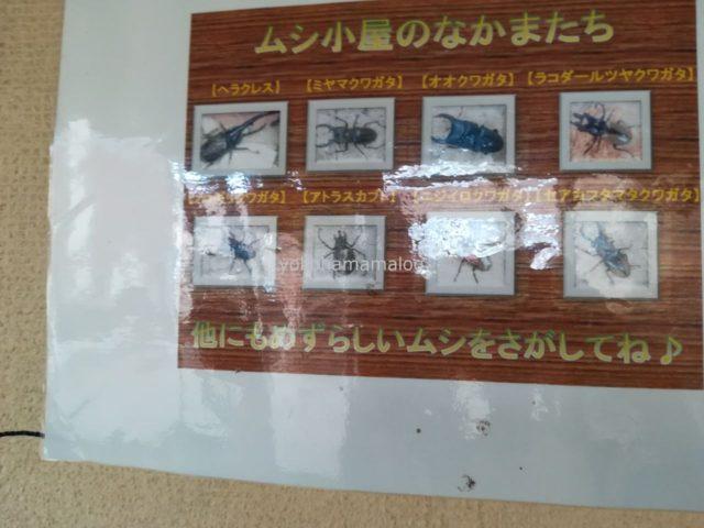 ムシ小屋の仲間たち。知らないムシもたくさんいます。