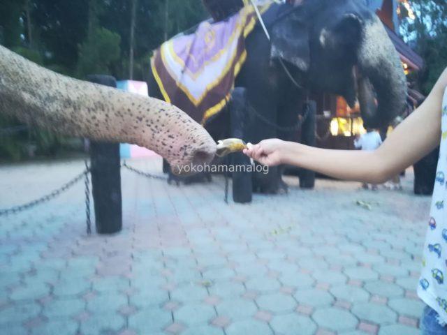 象へバナナをあげる長男。この距離でエサをあげられる機会はなかなかないですよね。