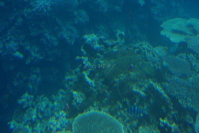 グラスボートからの眺め。サンゴ礁と熱帯魚が見えます。