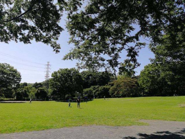 王禅寺ふるさと公園の芝生広場。広い!!